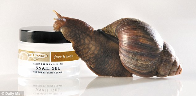 Anti-ageing: Snail mucus contains a cocktail of youth-boosting ingredients including hyularonic acid